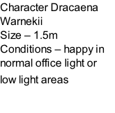 Character Dracaena Warnekii   Size – 1.5m  Conditions – happy in normal office light or  low light areas